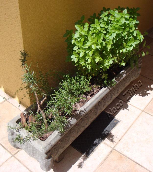 Para ter uma horta, canteiro ou vasos de ervas aromáticas