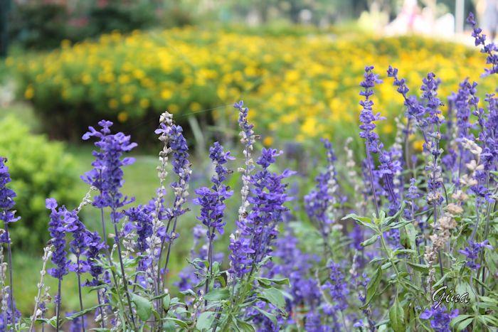 Flores no Parque Barigui