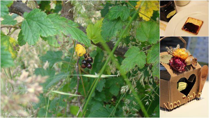 Calafate (Berberis microphylla) e geleia