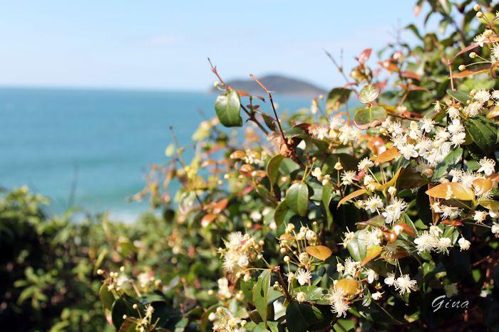 Flores do Costão do Santinho