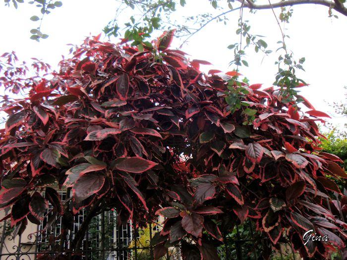Folhagem marrom e vermelha