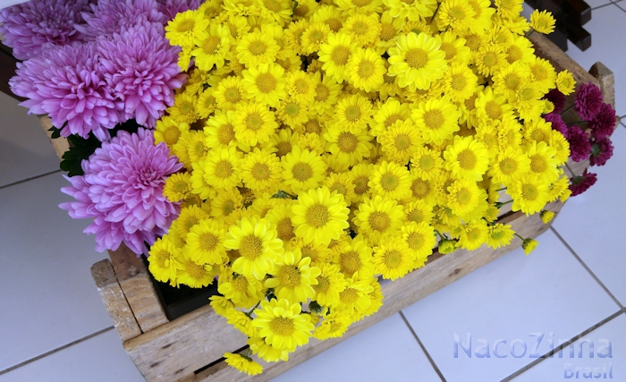 Crisântemos (Chrysanthemum morifolium)