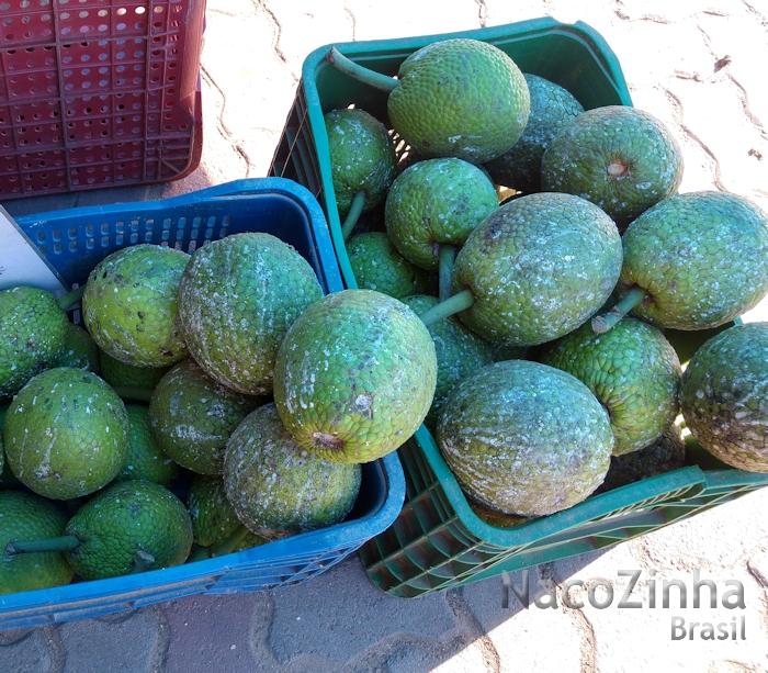 Fruta-pão (Artocarpus altilis)