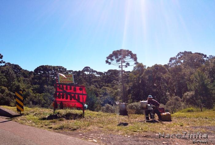 Pinhão à venda na beira da estrada no Paraná