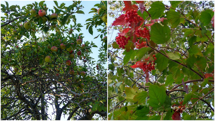 Maçãs e cranberries ácidas de Freeport