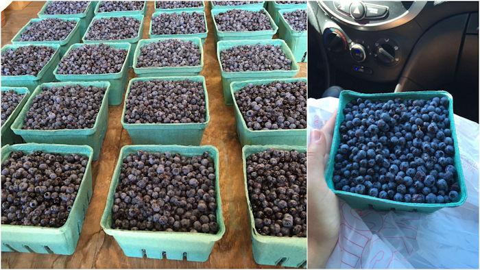 Mirtilos selvagens (wild blueberries)