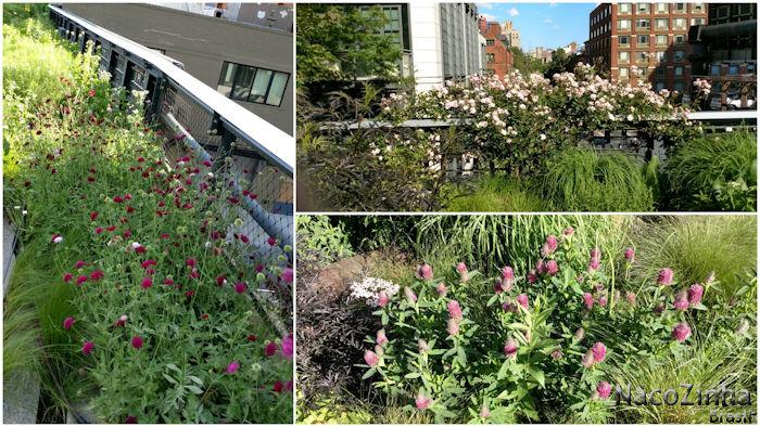 High Line - flores
