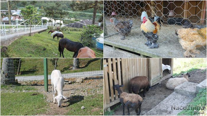 Hotel Fazenda Dona Francisca - animais